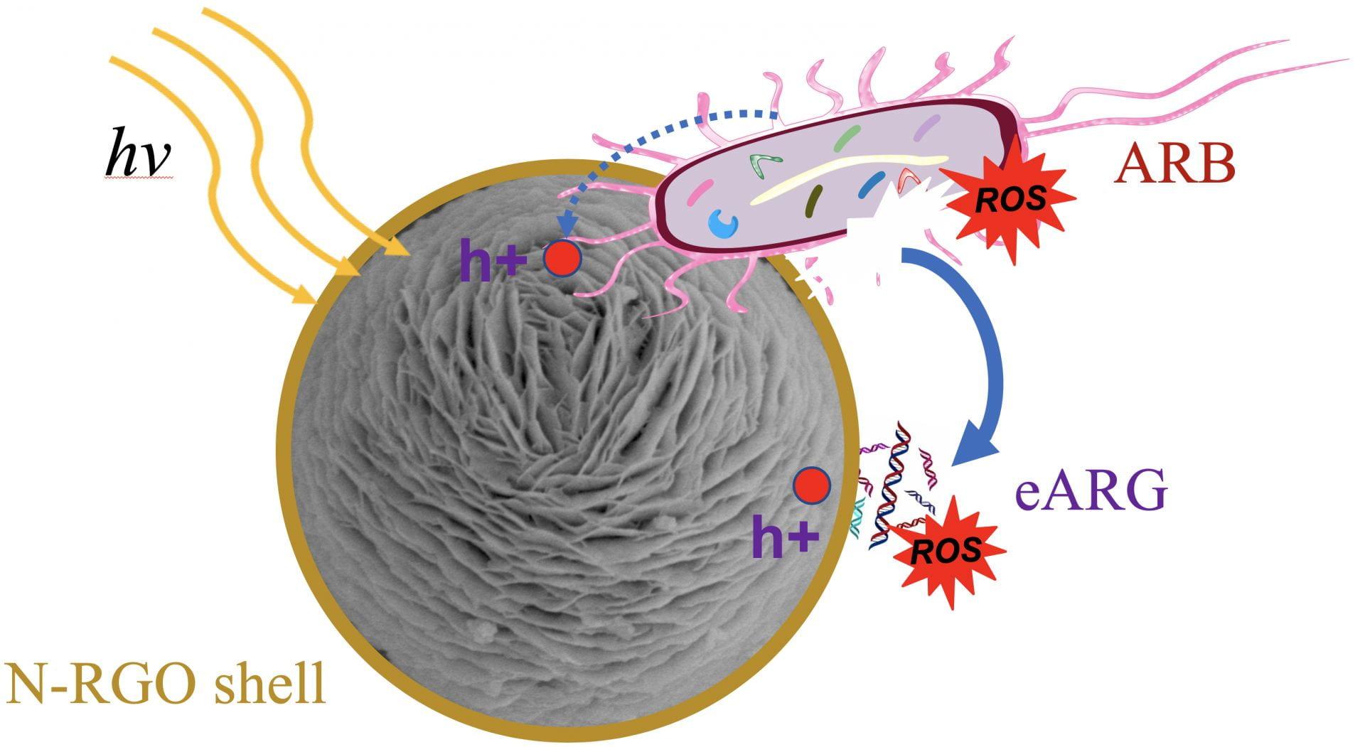 Grafenové nanočástice likvidují rezistentní bakterie (ARB) a volně plující geny srezistencí (eARG). Kredit: Alvarez Research Group/Rice University.