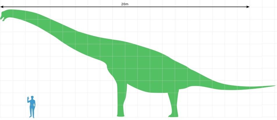 """Velikostní srovnání dospělého jedince druhu Brachiosaurus altithorax a dospělého člověka s výškou 1,8 metru. Tyto pozdně jurské """"plazí žirafy"""" dokázaly spásat vegetaci i v korunách vyšších stromů, možná do výšky 10 až 15 metrů nad zemí. Kredit: M. Ma"""