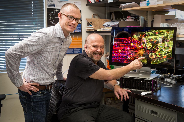 Mat Lewsey a Joseph Eckersmall epigenetické změny genomu přirovnávají funkčně ke  změnám, ke kterým dochází při přenesení alel (genů) z jené rostliny do genomu té druhé. (Kredit: Salk Institute)