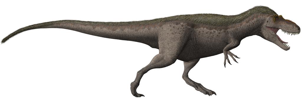Rekonstrukce druhu Daspletosaurus torosus, nejbližšího vývojového příbuzného nového tyranosaurida. Daspletosauři žili zhruba o 2 až 5 milionů let později a mohli tak být přímými evolučními potomky rodu Thanatotheristes. Společně tvoří tyto dva rody k