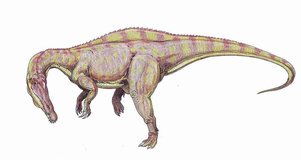 Rekonstrukce přibližné podoby suchomima. Tento teropod patřil v dospělosti při délce kolem 12 metrů do velikostní kategorie druhu Tyrannosaurus rex (ačkoliv nebyl tak robustní). Kredit: ?????, Wikipedie (volné dílo)