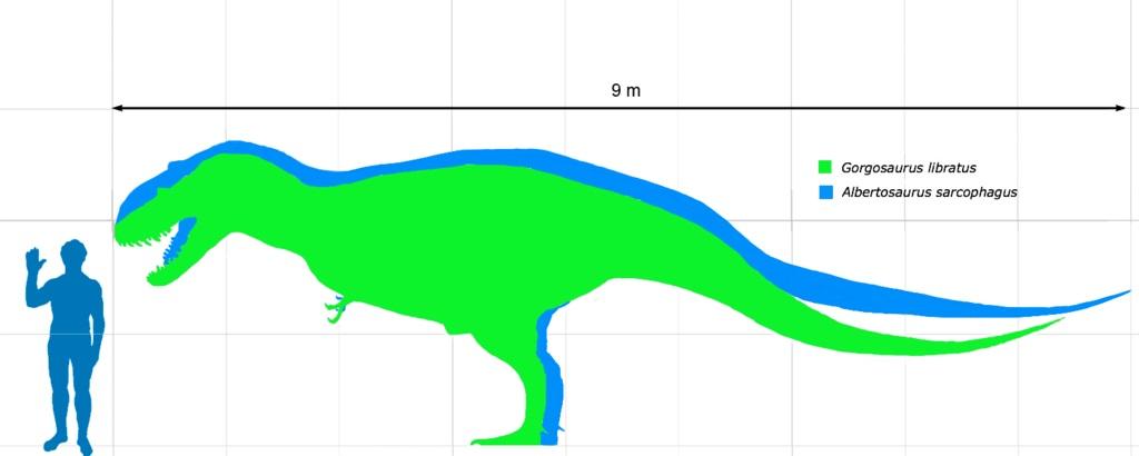 Čelistní rýha byla zřejmě společným znakem albertosaurinů, podčeledi tyranosauridů, do které v současnosti řadíme pouze dva rody – Albertosaurus a Gorgosaurus. V obou případech šlo o relativně lehce stavěné predátory o délce kolem 9 metrů a hmotnosti