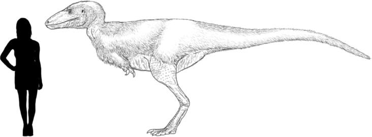 Přibližná představa o velikosti a vzezření alektrosaura, vzdáleného příbuzného mladšího a mnohem většího druhu T. rex. Kredit: Tomopteryx, Wikipedie (CC BY-SA 4.0)