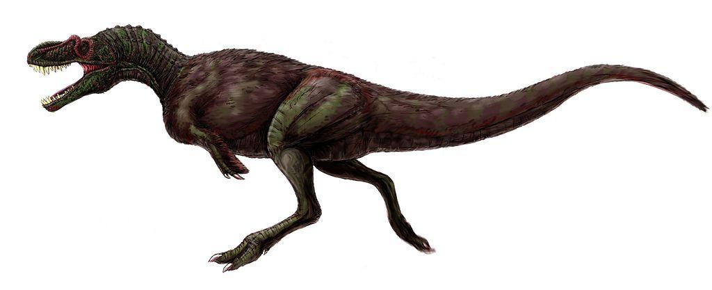 Rekonstrukce pravděpodobné stavby těla a celkového vzezření druhu A. montgomeriensis. Ve svých ekosystémech tento teropod pravděpodobně představoval dominantního predátora, schopného ulovit téměř jakoukoliv kořist. Jeho preferovanou potravou pak byli