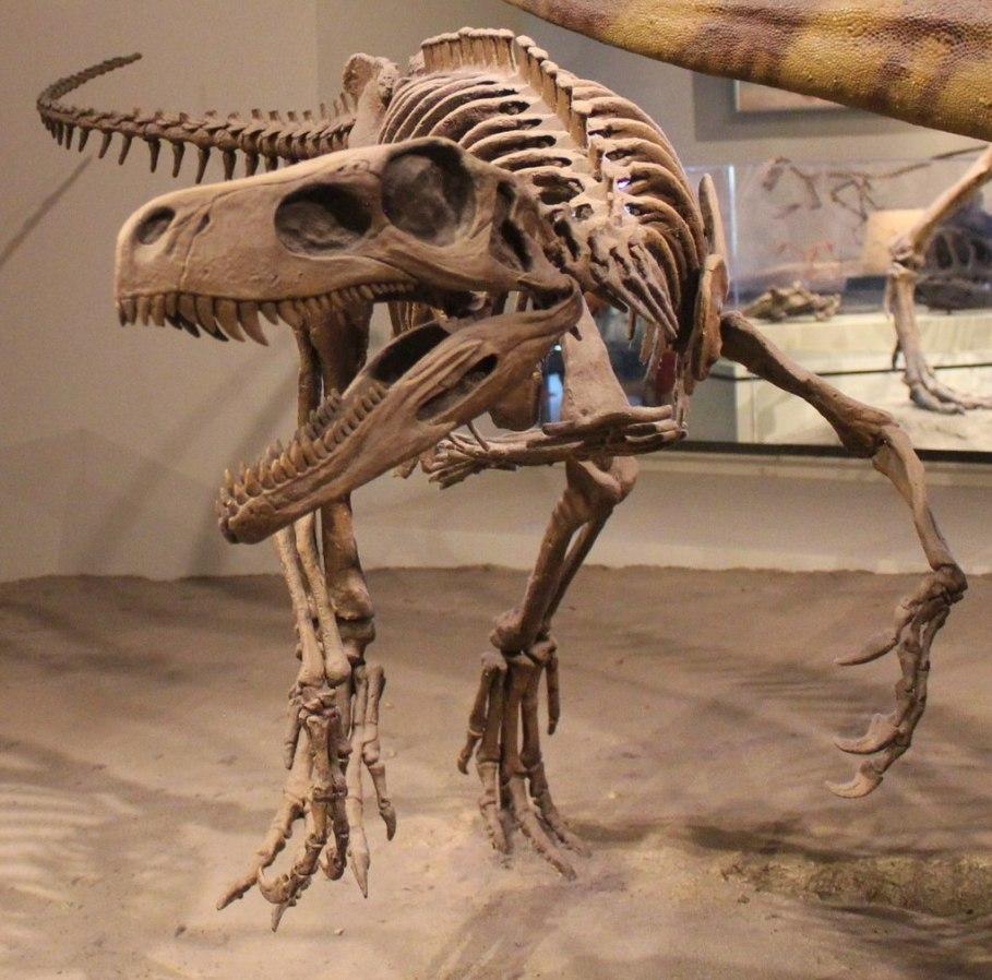 Objevy dinosaurů, jako je Herrerasaurus ischigualastensis z Argentiny, výrazně prodloužily předpokládanou dobu existence této skupiny. Nejstarší dnes známé fosilie dinosaurů jsou staré asi 235 až 230 milionů let. Kredit: Jonathan Chen; Wikipedie (CC