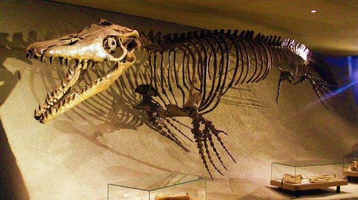 Jedním z posledních tvorů, kteří mohli zažít dopad planetky na vlastní šupinatou kůži,byli draví mořští plazi mosasauři(zde druhMosasaurus hoffmannii). Jejich obratle byly totiž objeveny přímo ve vrstvě tsunamitů, vzniklé po impaktu.Kredit:Ghedo