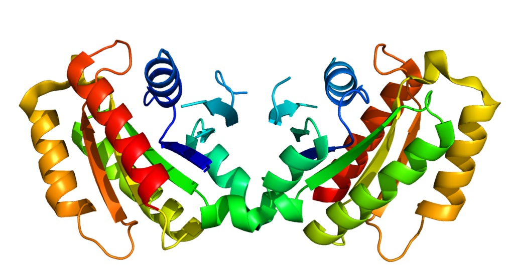 LRRK2 - Leucine-rich repeat kinase. (Kredit: Wikipedia)