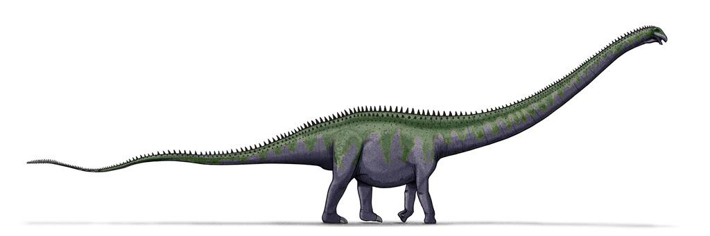 Původce stop z Plagne mohl být podobný celkovým tvarem těla i velikostí obřímu severoamerickému diplodokidovi druhu Supersaurus vivianae. Také tento sauropod dosahoval délky kolem 35 metrů a hmotnosti asi 40 tun. Kredit: LadyofHats, Wikipedie (volné