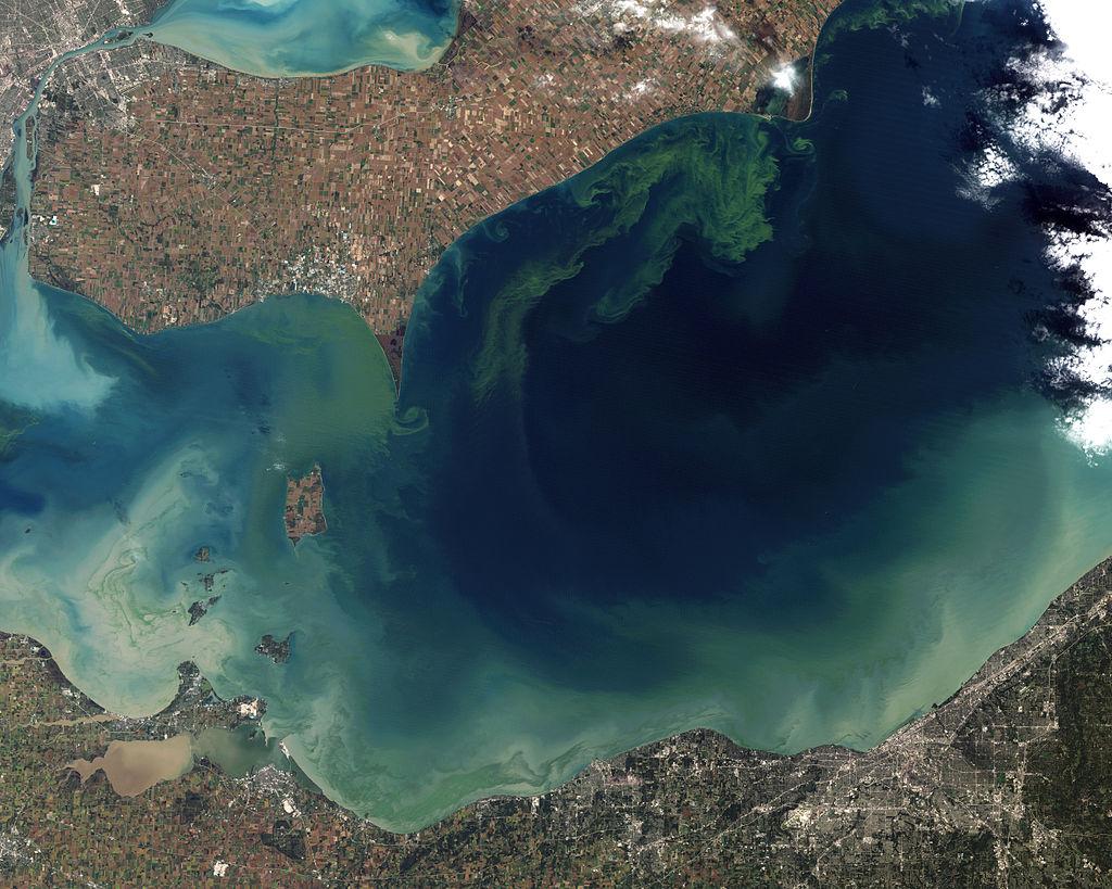 Satelitní snímek rozsáhlého vodního květu na Erijském jezeře (jímž prochází státní hranice mezi Kanadou a USA) v říjnu roku 2011. Přemnožené sinice zde způsobily malou ekologickou katastrofu, která ale nebyla ničím ve srovnání se situací na samotném