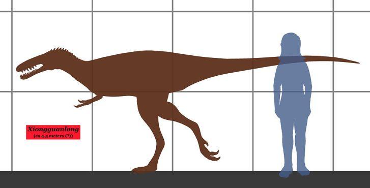 Xiongguanlong patřil ke středně velkým tyranosauroidům, z velikostního hlediska vlastně k jakémusi přechodnému stadiu mezi drobnými bazálními tyranosauroidy z jury a rané křídy a gigantickými tyranosauridy z konce křídové periody. Kredit: Conty, Wiki