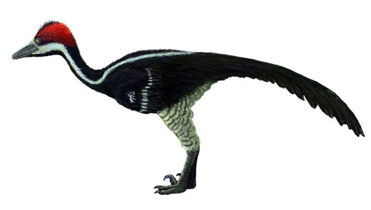 Na druhohorní dinosaury bychom měli pohlížet jako na příklad neuvěřitelného evolučního úspěchu. K domnělé zaostalosti a nezpůsobilosti měla tato skupina obratlovců skutečně velmi daleko. Zde mongolský troodontid druhu Zanabazar junior. Kredit: FunkMo