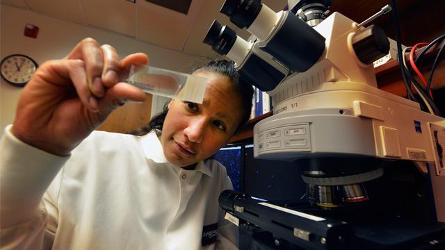 """Alexis M. Stranahan, neurovědkyně: """"Tuky v potravě vedou k tvorbě cytokinů v hipokampu. Preparáty mozkové tkáně vypovídají o ztrátě funkčnosti synapsí i mozku jako celku."""" (Foto: GRU Senior Fotograf, Phil Jones)."""
