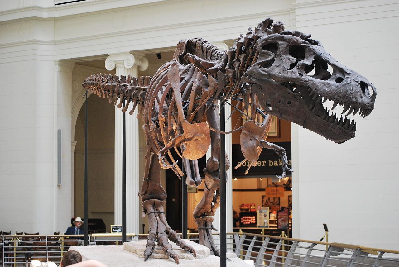 Majestátní kostra dosud nejlépe zachovaného tyranosaura, objevená v létě roku 1990 v Jižní Dakotě. Zaživa byl tento teropodní dinosaurus dlouhý skoro 12,5 metru a vážil kolem 7 metrických tun. Kredit: OnFirstWhols, CC BY-SA 3.0 (Wikim