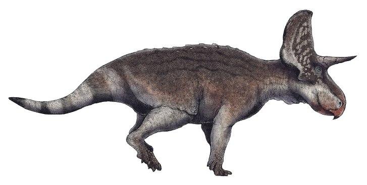 Timurlengia sdílela ekosystémy s množstvím dalších organismů, včetně býložravých ptakopánvých dinosaurů. Jedním z nich byl i malý rohatý dinosaurus druhu Turanoceratops tardabilis. Při odhadované délce kolem 2 metrů a hmotnosti do 200 kilogramů mohl