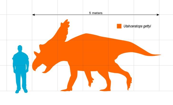 Silueta zobrazující přibližný tvar těla a velikost dospělého jedince utahceratopse v porovnání s člověkem. Lebka tohoto ceratopsida mohla dosahovat délky až 2,4 metru a patřila tedy k nejdelším známým lebkám u suchozemských živočichů vůbec (delšími l