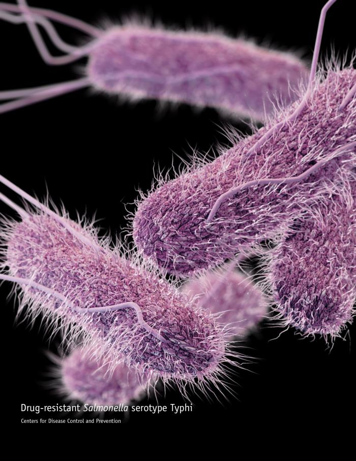 Salmonella enterica. Kredit: CDC.