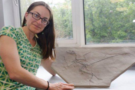 Paleontoložka Maria McNamarová ukazuje desku jemnozrnné horniny s fosilií opeřeného teropodního dinosaura. Podobné objevy umožnily zjistit víc informací například i o fyziologii neptačích dinosaurů. Kredit: John Sheenan