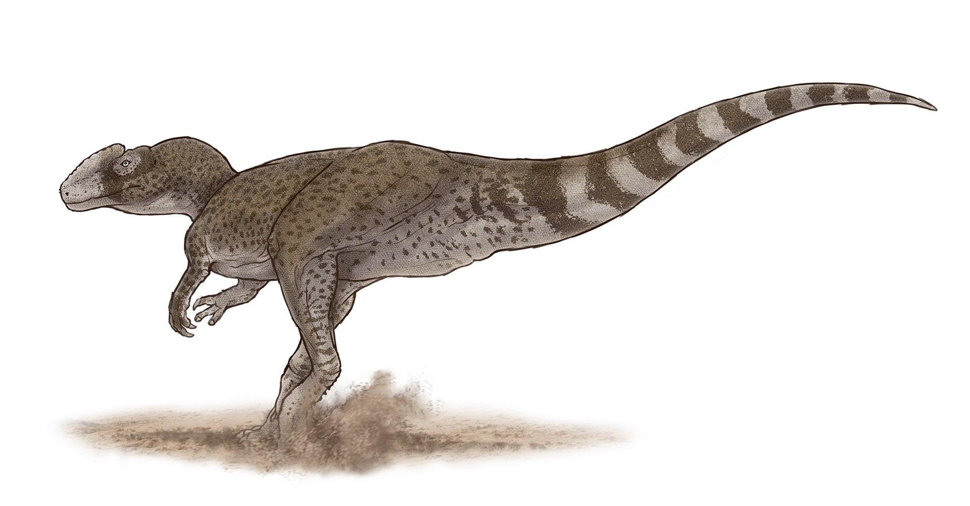 Dominantním státem v počtu platných druhohorních dinosauřích druhů je již 12. rokem Čína. Jedním z více než tří stovek druhů, dosud popsaných z území této velké asijské země, je například teropod Chuandongocoelurus primitivus, žijící v období střední