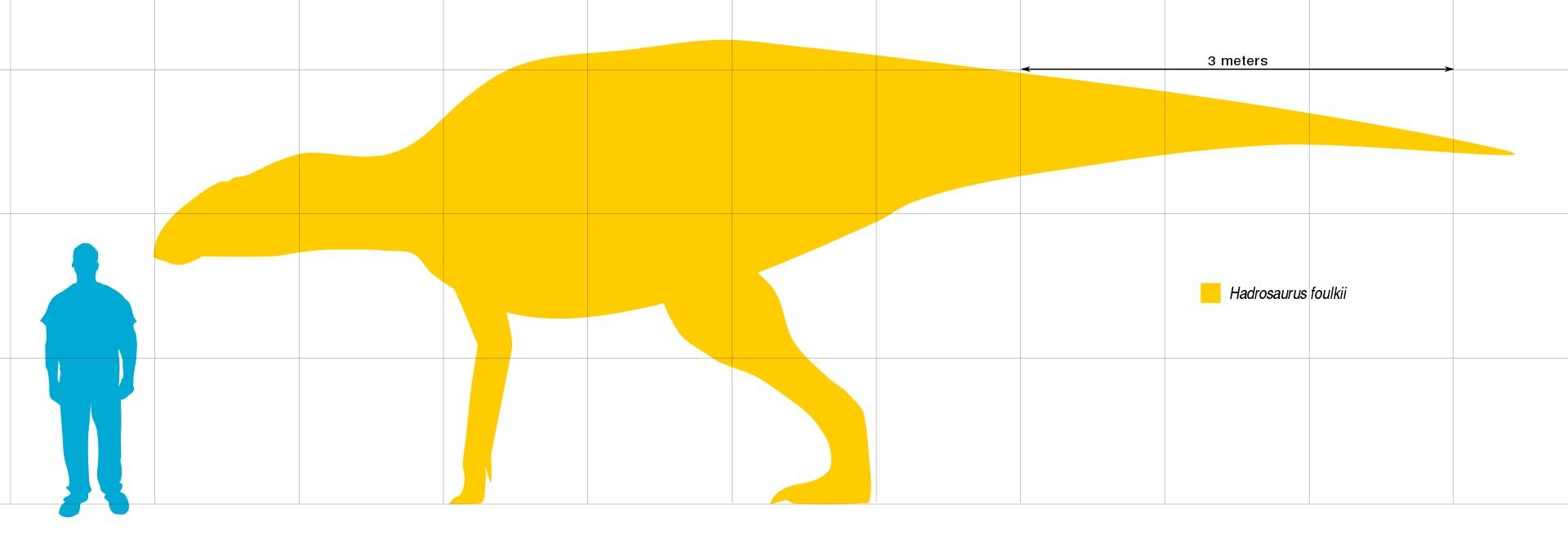 Hadrosaurus foulkii byl středně velkým hadrosauridem, dosahujícím délky v rozmezí 7 až 9 metrů a hmotnosti několika tun. Žil v době před zhruba 80 miliony let a patří tak k vývojově starším zástupcům své čeledi. O jeho životním prostředí a predátorec