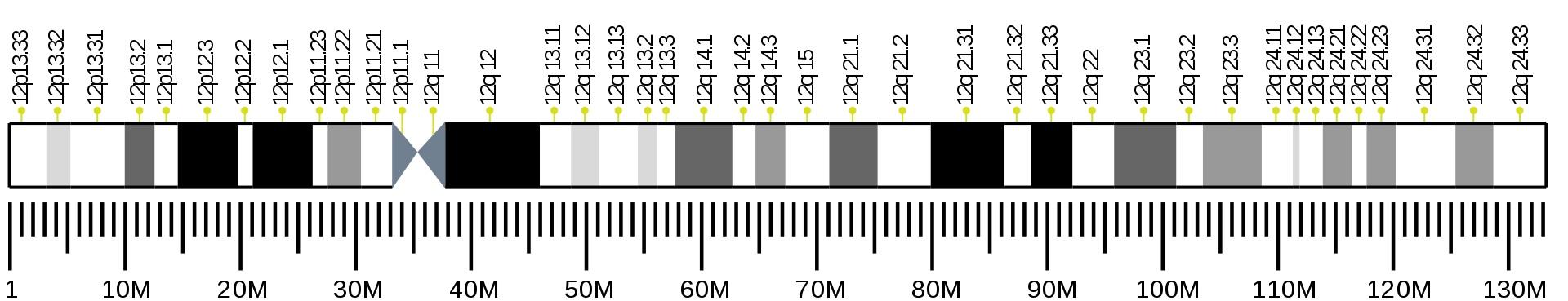 Lidský chromozom 12 s lokalizací genu NELL2 na delším chromozomálním raménku. Kredit Wikipedia, volné dílo).
