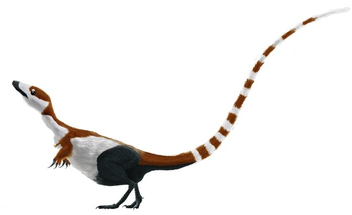Rekonstrukce celkového vzezření a zbarvení teropodního dinosaura druhu Sinosauropteryx prima. Již v lednu roku 2010 byl odhalen pravděpodobný barevný vzor proto-peří na jeho ocasu. Kredit: Matt Martyniuk, Dinoguy2, Wikipedie