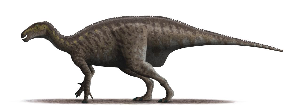 Přibližná podoba původce větších fosilních otisků ze Špicberků. Jednalo se patrně o mohutného ornitopodního dinosaura, příbuzného ve stejné době žijícímu rodu Iguanodon. Vzhledem k absenci jakýchkoliv kosterních pozůstatků těchto dinosaurů však o nic