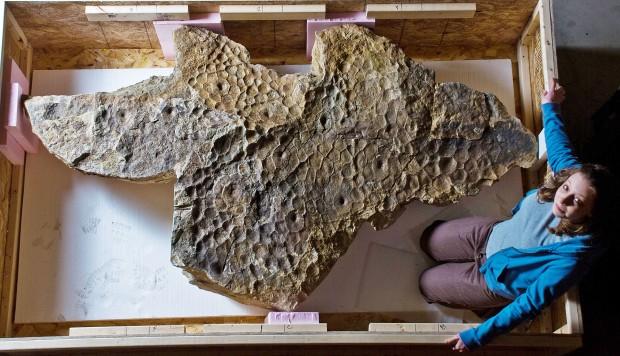 """Úžasně zachovaná zkamenělina otisku kůže triceratopse, známého jako """"Lane"""". Jak se ukazuje, tito dinosauři skutečně nevypadali ani z hlediska textury své pokožky jako cokoliv, co známe ze současné přírody. Kredit: Black Hills I"""