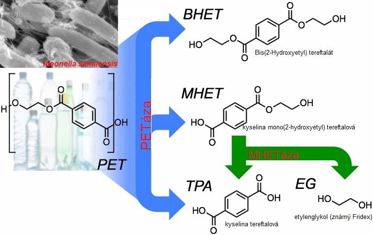 Bakterie Ideonella sakaiensis rozkládá povrch PET pomocí dvou enzymů, PETázy a MHETázy, na etylenglykol (známe ho jako Fridex) a kyselinu tereftalovou. Rozklad je na řešení problému s odpadem příliš pomalý. Bakterie s PETázou upravenou v laboratoři b