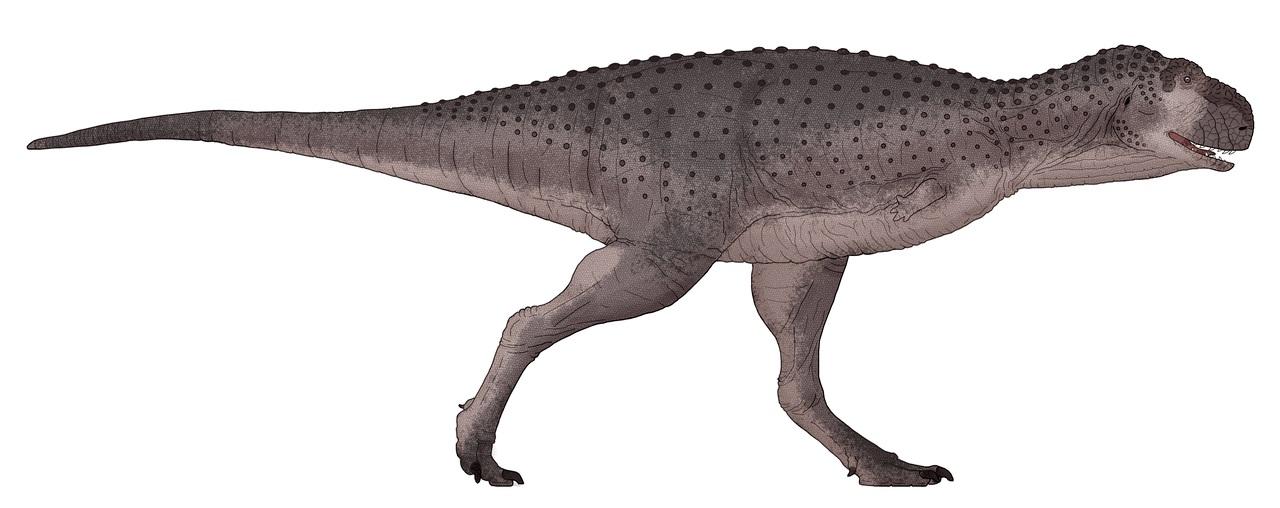Hypotetická rekonstrukce vzezření abelisaurida druhu Thanos simonattoi. Tento asi 6 metrů dlouhý teropod představoval středně velkého až většího masožravce, který však ve svých ekosystémech nebyl dominantním predátorem. Kredit: Juan, Wikipedie (CC BY