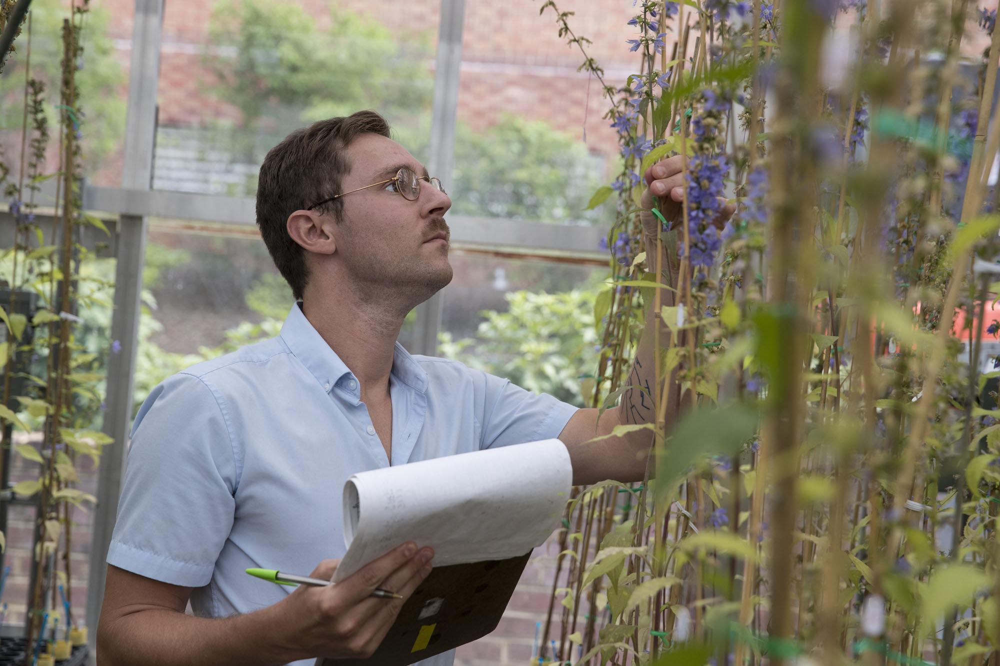 Matt Koski, první autor studie v univerzitním skleníku. Kredit: Dan Addison, University of Virginia.