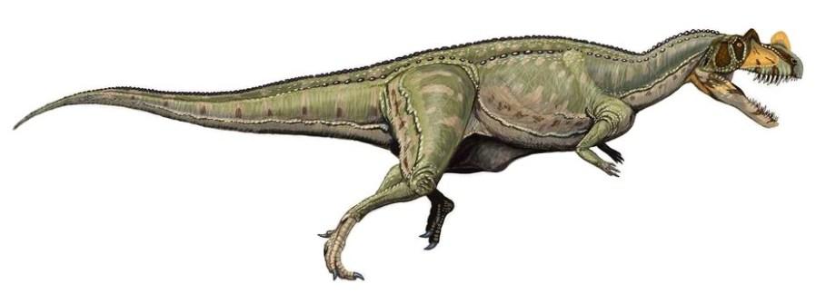 Rekonstrukce původního vzezření teropodního dinosaura druhu Ceratosaurus nasicornis. tento středně velký dravý dinosaurus žil v období pozdní jury na území Severní Ameriky a možná i Evropy. Spadal do čeledi Ceratosauridae a kladu Ceratosauria, jejich