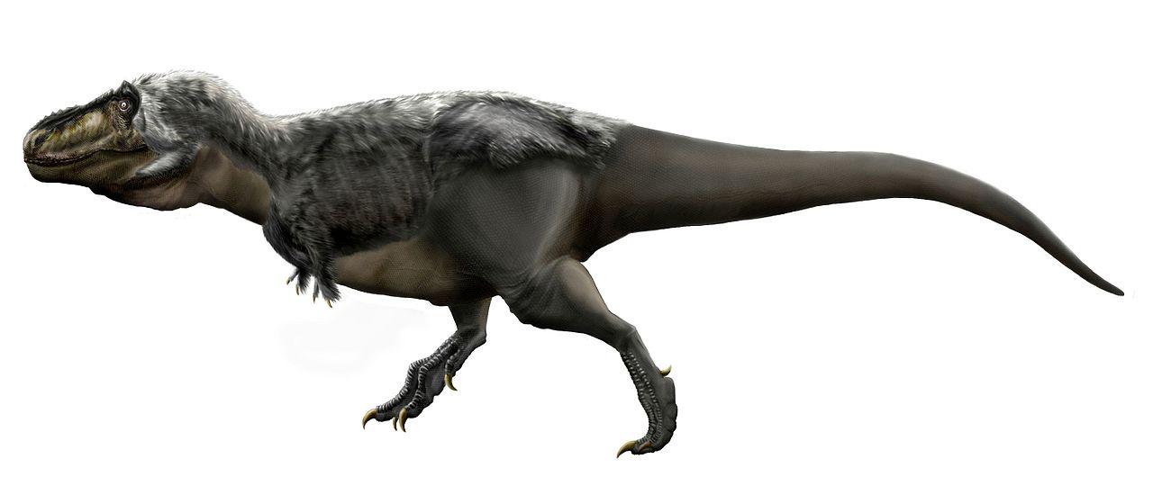 Přední končetiny tyranosaura působí oproti ohromnému tělu jako miniaturní přívěsky, přesto byly dlouhé asi jako paže dospělého člověka a přitom nejméně 3,5krát silnější. Každá z nich dokázala uzvednout zhruba dvousetkilogr