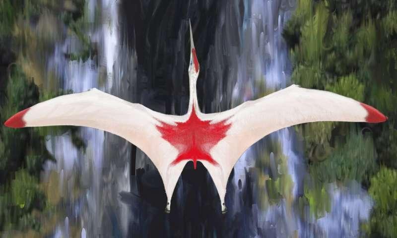 Tak si prvního kanadského pterosaura představuje David Maas.