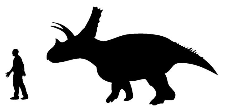 Silueta titanoceratopse a jeho velikostní porovnání s dospělým člověkem (zde podoba s mírně kratším lebečním hřebenem). Tento rohatý dinosaurus dosahoval velikosti současného slona afrického. Kredit: Andrew A. Farke, Nobu Tamura; Wikipedie (CC BY-SA