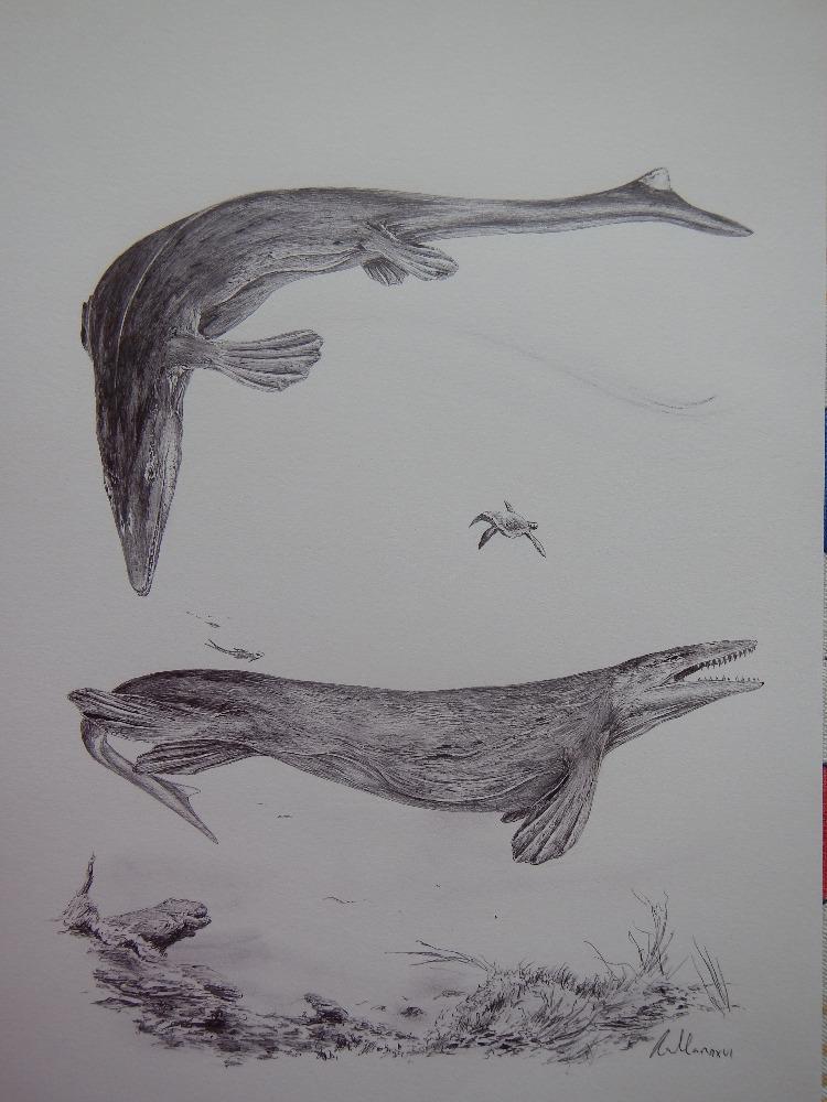 Mosasauři byli vrcholovými predátory moří a oceánů v průběhu posledních milionů let křídové periody. Jak ukazují nové objevy, tito hadům a ještěrům příbuzní plazi žili až do samotné katastrofy na konci křídy a vyhynuli spolu s neptačími dinosaury a m