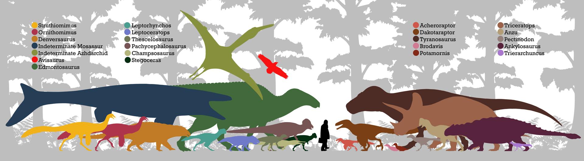 Znázornění siluet převážné části megafauny, známé ze sedimentů geologického souvrství Hell Creek. Ačkoliv zde výrazně převažují dinosauři, dnes už sem musíme zařadit také blíže neurčený druh obřího mosasaurida (tmavě modrá silueta). Kredit: PaleoNeol