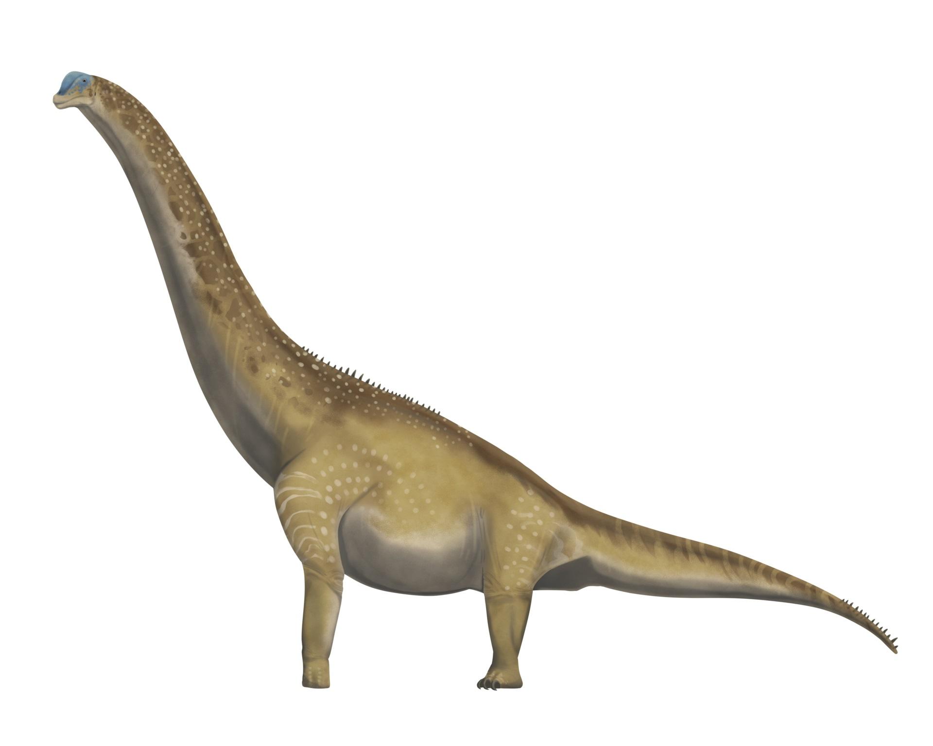 Moderní rekonstrukce možného vzezření dospělého exempláře brachiosaurida druhu Brachiosaurus altithorax. Ačkoliv záhadný severoafrický sauropod nepatřil do stejného rodu a možná ani stejné čeledi, byl podobně velkým tvorem. Nezbývá než doufat, že nám