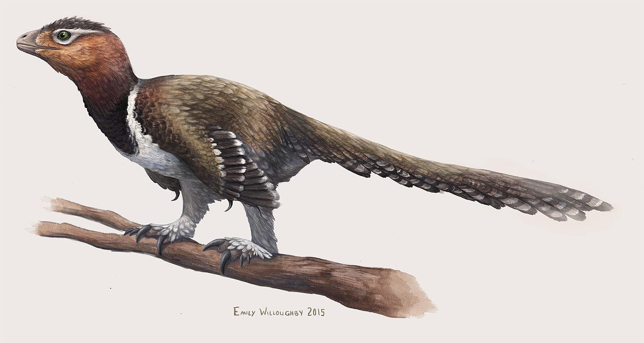 """Jak moc ptačí už je """"dost"""" ptačí? V Rumunsku objevený dromeosaurid (?) Balaur bondoc mohl být ve skutečnosti velkým býložravým ptákem, obývajícím východní Evropu v době před 70 miliony let. Kredit: Emily Willoughby, CC BY-SA 4"""