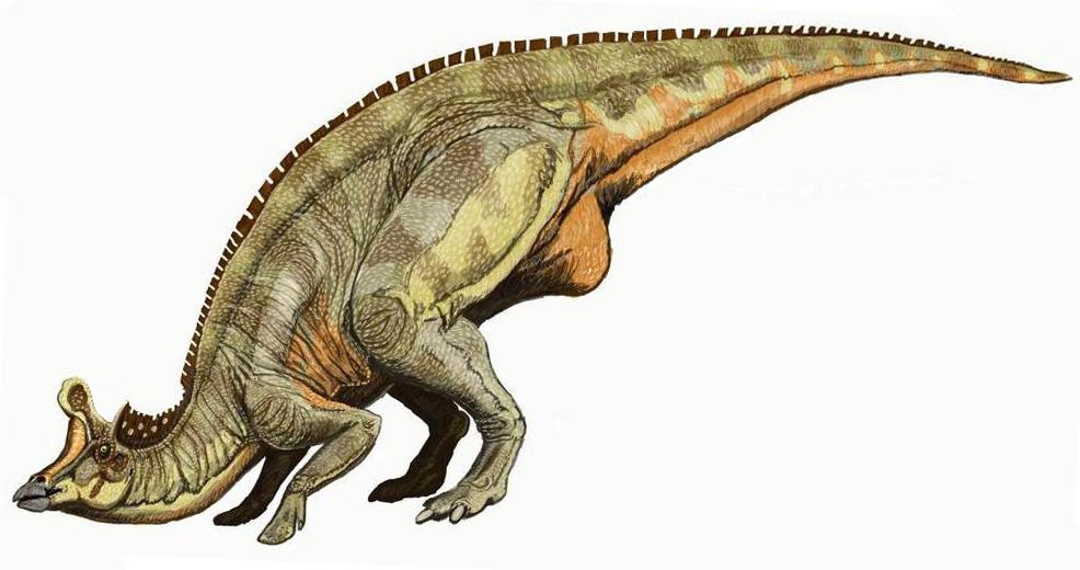 """Aby se """"ve volné přírodě"""" na ostrově Isla Nublar nebo Isla Sorna uživila dostatečně početná populace tyranosaurů, muselo by být k dispozici řádově několik stovek až tisíc velkých kachnozobých dinosaurů, jako je tento Lambeosaurus (který ale ve skuteč"""