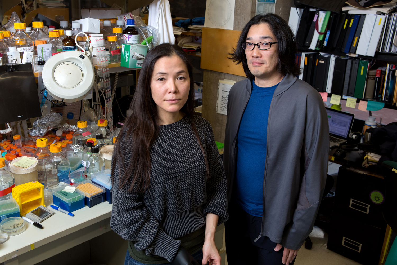 Junko Ogawa vlevo. Kredit: Salk Institute.