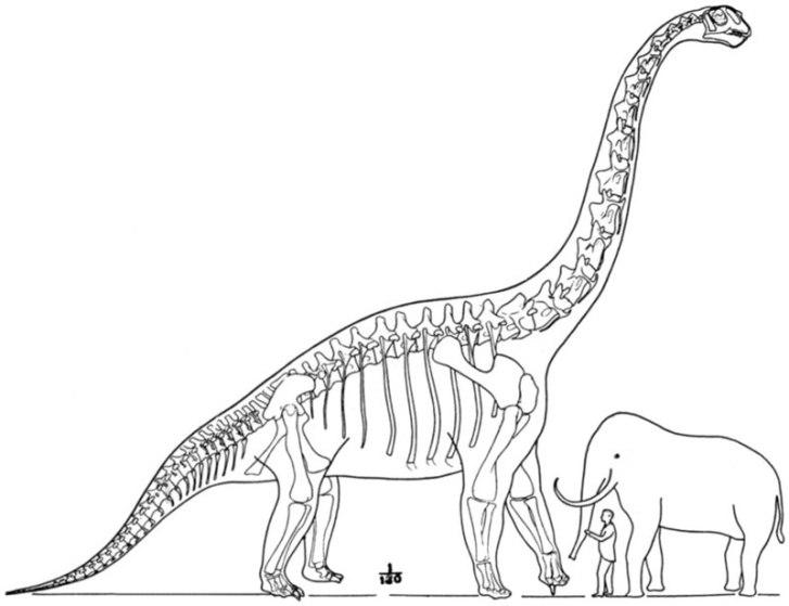 Zastaralá ilustrace, zobrazující brachiosaura ve velikostním porovnání s člověkem a velkým chobotnatcem. Obrázek byl vytvořen paleontologem Williamem D. Matthewem v roce 1915, kdy byl B. altithorax ještě největším známým dinosaurem. Kredit: W. D. Mat