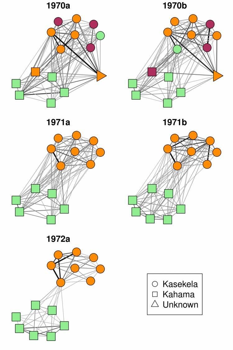 Předehra kválce: Sociální sítě šimpanzů vGombe. Kredit: Joseph Feldblum, Duke University.