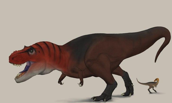 Rekonstrukce pravděpodobného vzezření dospělého tyranosauřího jedince. Ačkoliv dosud objevení jedinci dosahovali délky kolem 12 metrů a hmotnosti zhruba 7000 kilogramů, je zcela reálné, že největší zástupci mohli být dlouzí až kolem 15 metrů a dosaho