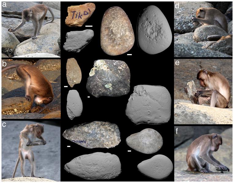Kamenné nástroje thajských makaků jávských. Kredit: Haslam et al. (2013) / Wikimedia Commons.