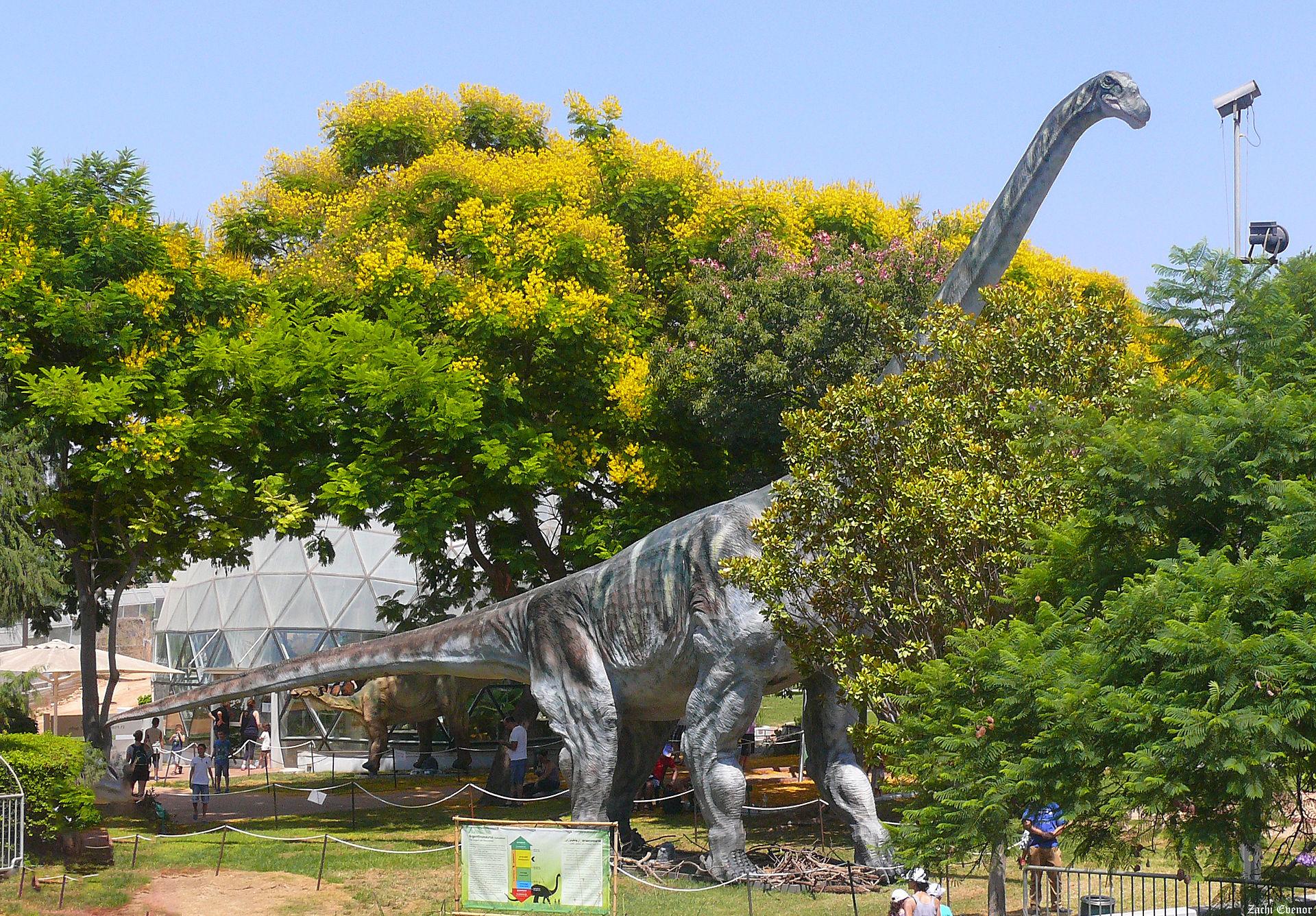Model obřího titanosaurního sauropoda druhu Argentinosaurus huinculensis téměř v životní velikosti. Počítačový model lokomoce tohoto obřího dinosaura ukázal, že se i přes svou osmdesátitunovou hmotnost dokázal pohybovat překvapivě svižně – rychlostí