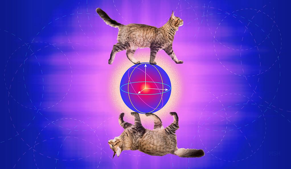 Slavná kočka našla pozoruhodné využití. Kredit: Yale / Michael S.Helfenbein.
