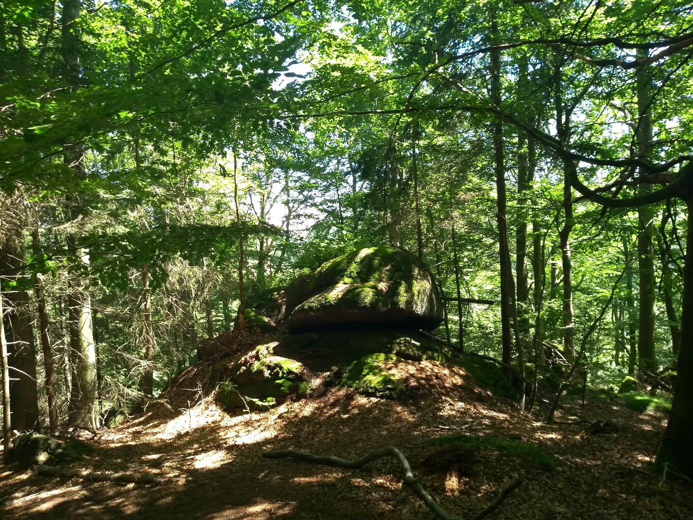Krásné smíšené lesy na jizerské hřebenovce. Dejme si pozor, abychom při honbě za snižováním emisí oxidu uhličitého nenadělali větší environmentální škody než užitek. (Foto Vladimír Wagner).