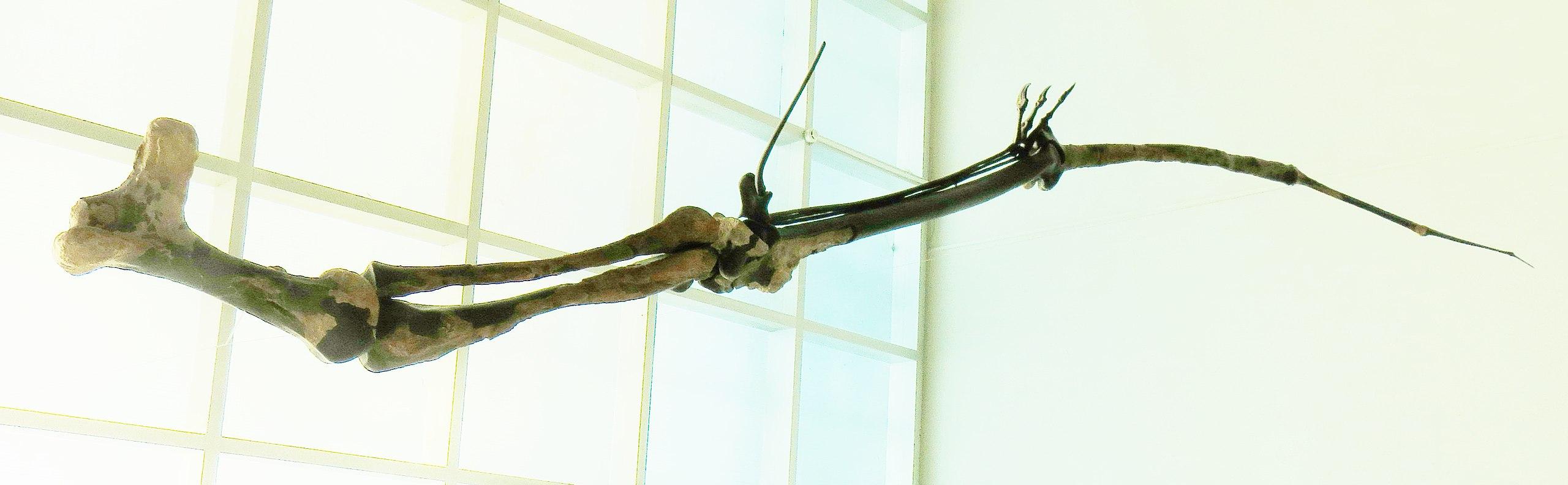 Na poměry létajících tvorů jsou azdarchidní ptakoještěři skutečnými giganty. Každé z křídel největších zástupců této skupiny mohlo mít v průměru i přes pět metrů. Přesto byli tito aktivně létající plazi na svoji velikost velmi lehcí, protože relativn