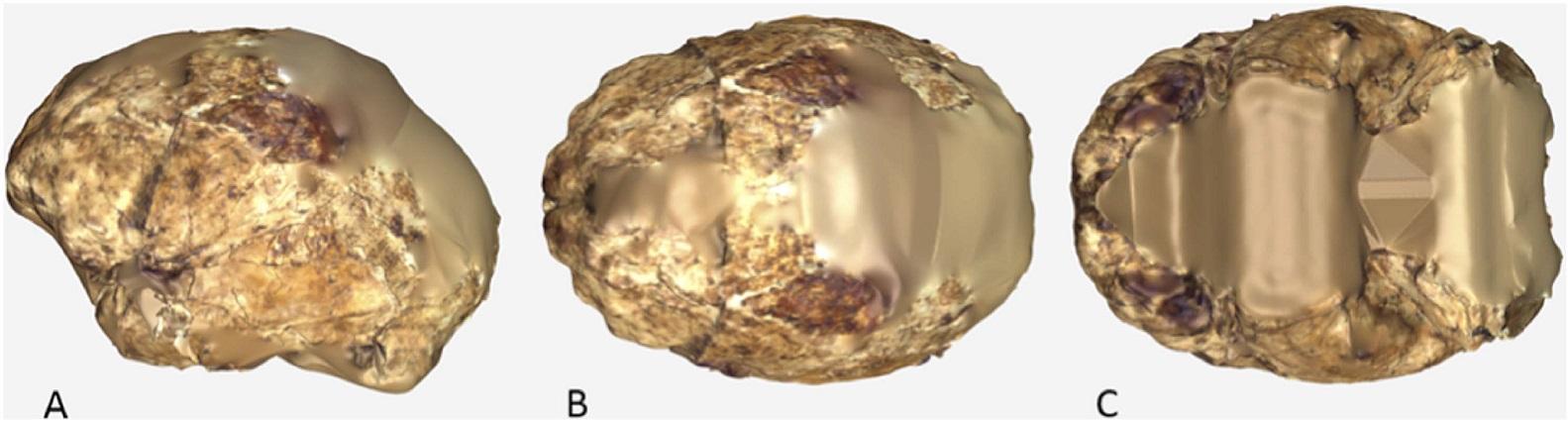 Rekonstrukce endokrania (vnitřního prostoru mozkovny), vytvořená na základě obou nálezů lebky (podle Berger et al., DOI: 10.7554/eLife.09560.024)