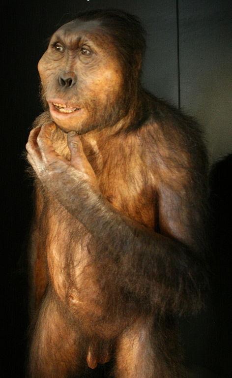 Paranthropus boisei vcelé své kráse. Kredit: Nachosan / Wikimedia Commons.